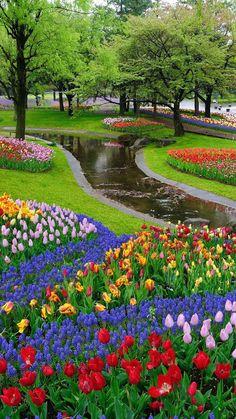Beautiful Flowers Wallpapers, Beautiful Photos Of Nature, Beautiful Nature Wallpaper, Nature Pictures, Amazing Nature, Beautiful Places, Most Beautiful Gardens, Beautiful Flowers Garden, Beautiful Flower Arrangements