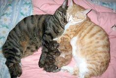 Das sind die 18 stolzesten Katzenmütter der Welt. Nr. 15 bringt Dich zum Kreischen. | LikeMag | We like to entertain you