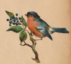 vel k n Vintage Birds, Vintage Images, Vintage Posters, Audubon Birds, Bird Artwork, Kinds Of Birds, Card Birthday, Birthday Images, Birthday Quotes