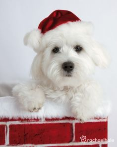 "seasonalwonderment: "" Merry Christmas! "" Pets at Christmas"