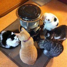 ストーブ猫多め // extra cat stove.
