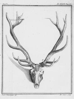 antlers and skull, from Illustrations de Histoire naturelle générale et particulière, by Jacques de Sève et al., 1756