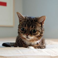 BUB imagines the biggest fish.