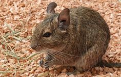 A comprehensive degu care sheet.