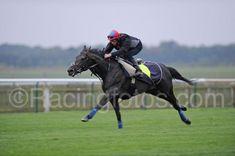 Horse Racing, Race Horses, Golden Horn, Thoroughbred, Equestrian, Irish, Champion, Sports, Animals