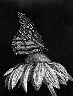 Butterfly Scratchboard által juevans
