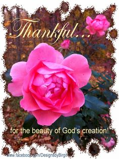 THANKFUL...for the beauty of God's creation!
