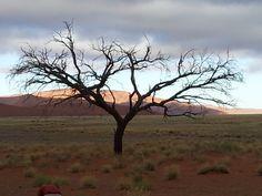 #Namibia desert  Explore more: stories.namibiatourism.com.na