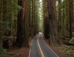 """Apartment in Phillipsville, United States. Come enjoy our sweet 1940's rooms and cottages alongside the famous """"Avenue of the Giants"""" in Humboldt County! This listing is for Room 6!  It has has a private bathroom, TV, heating, and 2 beds, one queen and one twin. See you in Humboldt!"""