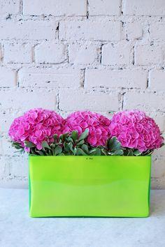 Pink hydrangea in a stylish lime green glass trough. #reidsflorists