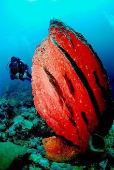 diving in dominican republic | Scuba Diving in Dominican Republic | Facebook