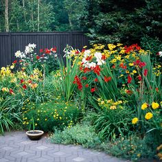 Old-fashioned flower bed: Coreopsis, oxeye sunflower, falling stars, daylilies