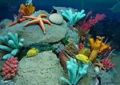 beautiful sea creatures - Google Search