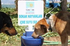 waterer for street dogs and cats for sale on http://www.modernciftlik.com
