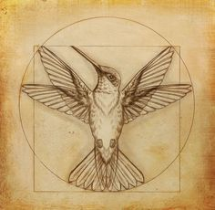 New drawing body men leonardo da vinci Ideas Illustration Colibri, Hummingbird Illustration, Hummingbird Drawing, Geometric Hummingbird Tattoo, Geometric Tattoos, Tattoo Sketches, Tattoo Drawings, Tattoo Art, Arm Tattoo