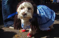 dress-up-your-dog-4