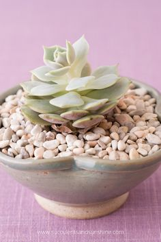 Find out why this Echeveria Lola is starting to bend and stretch out