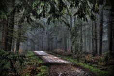 Alice Holt Forest, UK