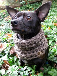 Free crochet pattern: If you give a dog a cowl #crochet