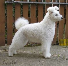 Pumi 21 Awesome Dog Breeds You& Never Heard Of And Need To Know About Immediately Unique Dog Breeds, Rare Dog Breeds, Cute Dogs Breeds, Pet Breeds, Big Dogs, I Love Dogs, Small Dogs, Pumi Dog, Cute Puppies