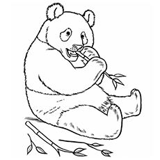 The Panda Bear Zoo Animal Coloring Pages Printable