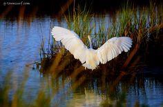 Galveston, Texas, is a natural hot spot for birding. #Nature #Birding