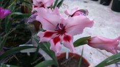 Variety of Seeds&Bulbs. Gladiolus, Seeds, Flowers, Plants, Florals, Planters, Flower, Blossoms, Plant