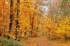 #PureGold Perfect path for a fall hike! #Fall #Beauty #ChapinEstate