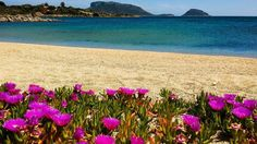 Summer in a Solitary Beach. I was surrounded by Purple Flowers and a stunning Crystal Blue water. What a Place!