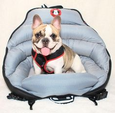 PupSaver AirPup Dog Car Safety Seat – Heavy Duty Pet Crates #dogs #dogsafety #crashtested