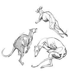 Pin by character design references on creature design dogs. Greyhound Tattoo, Greyhound Art, Animal Sketches, Animal Drawings, Dog Anatomy, Animal Anatomy, Nature Sketch, Dog Illustration, Character Design References