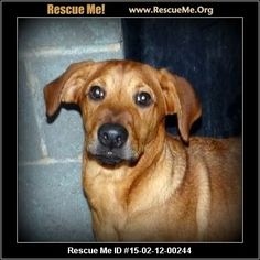― Missouri Dog Rescue ~Sparkle (female) Lab Mix  Age: Young Puppy Health: Spayed, Vaccinations Current  I am a very sweet, gentle, calm girl. I am shy, pretty red with a cute bob tail. I will be sure to be a very faithful companion for the rest of my life. I only ask that you take good care of me, love me and include me in all of your activities. Franklin County Humane Society 1222 W. Main Street Franklin County Union, MO 63084  Contact: Erin Marler