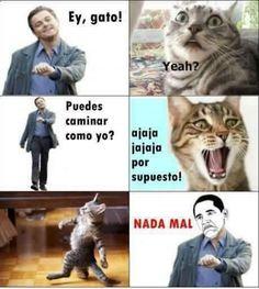 #memes #chistes #humor ➛ http://www.diverint.com/memes-divertidos-quieres-ser-mi-novia