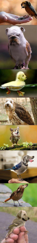 8 Bizarre Photoshopped Dog Bird Mashups That Will Make You Look Twice