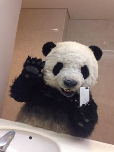 ⭐sigueme como Mildred Rojas, te lo agradezco⭐ Cute Baby Animals, Animals And Pets, Panda Images, Tmnt Girls, Cartoon Panda, Panda Art, Most Beautiful Animals, Bare Bears, Cute Panda