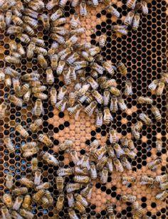 The Reason I Keep Bees | Edible Feast via Edible Boston #ediblebackyard