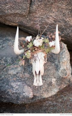 The Wild African Moon Shed Wedding, Bush Wedding, Wedding Pics, Wedding Shoot, Wedding Vendors, Wedding Flowers, Wedding Ideas South Africa, Safari Wedding, African Theme