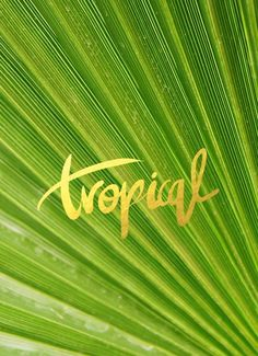 gold and tropical Typography Quotes, Typography Letters, Graphic Design Typography, I Need Vitamin Sea, Branding, Single Words, Socrates, Tropical Paradise, Tropical Vibes