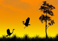 From a series of exotic silhouettes -Naveed Mughal's Flickr