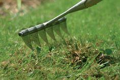 Om optimaal te genieten van een strak mooi groen gras is gras verticuteren van groot belang. Het dode materiaal zoals bladeren en grasafval zorgt ervoor dat schimmels zich kunnen ontwikkelen. Er ontstaat een soort vilt laag op het gras, waar weinig water, licht en lucht doorheen kan komen. Hierdoor blijft het gras vochtig en zuur, waardoor mosgroei ontstaat. Om dit te voorkomen moet het afval 'uitgekamd' worden, oftewel het gras verticuteren. Hierdoor houdt u het gras schoon en gezond.