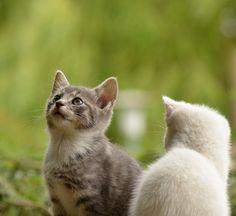 Кошка, Молодое Животное, Любопытный, Дикая Кошка