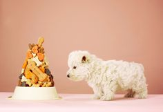 Making dog treats at home allows you to be creative while pleasing your pet. Whether you decide to give Fido a birthday party or just a baked surprise, topping it with a yogurt frosting flavored with his favorite sweet adds to his delight. Homemade Dog Treats, Pet Treats, Homemade Cheese, Dog Treat Recipes, Dog Food Recipes, Dog Bakery, Novelty Birthday Cakes, Dog Food Brands, Puppy Food