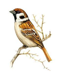 Draw, Bird, Animals, Illustrations, Nature, Animales, Naturaleza, Animaux, To Draw