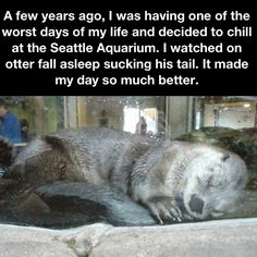 amazing things can be felt by going to an aquarium  - some of my favourite places to spend time