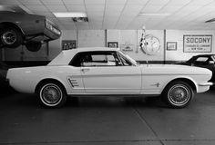 1966 Mustangs