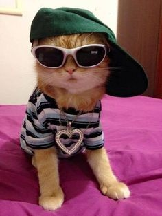 Cuteness level: Infinite - Top Cats so Cute Cute Cats And Kittens, I Love Cats, Crazy Cats, Cool Cats, Kittens Cutest, Cute Funny Animals, Cute Baby Animals, Cute Dogs, Funny Cats