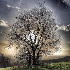 This tree sits at the top of Kings Wood on the edge of Wavering Down.  It is known in our house as Daddy's Tree as it is where we scattered some very special ashes.  This morning it was beautiful up there and made me realise how lucky we are to live in Somerset! #memories #sunshine #wintersun #iphone #onlyiphone #nofilter #snapseed #somerset #westcountry #tree #sillouette