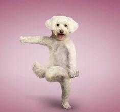 Yoga Dogs – Enpundit