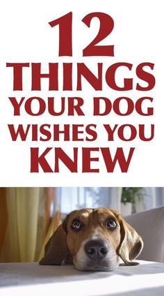 Very good information. I've never thought of a lot of these!   12 Things Your Dog Wishes You Knew!