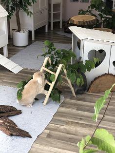 Bunny Cages, Rabbit Cages, Pet Bunny Rabbits, Pet Rabbit, Cute Baby Bunnies, Cute Baby Animals, Indoor Rabbit Cage, Lapin Art, Bunny Room